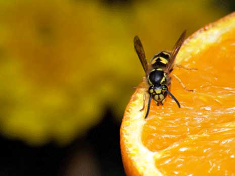how to keep wasps away from balcony